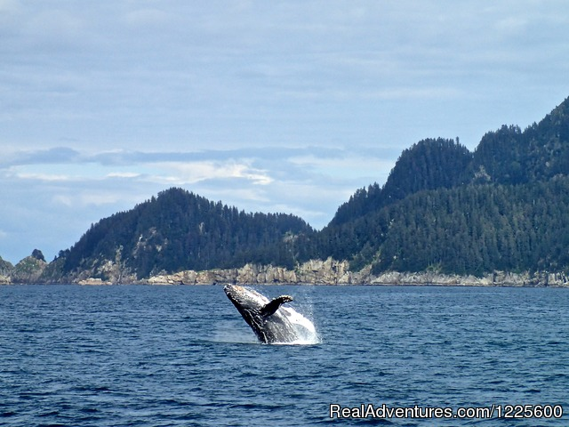 - Kayak Adventures Worldwide in Seward, Alaska