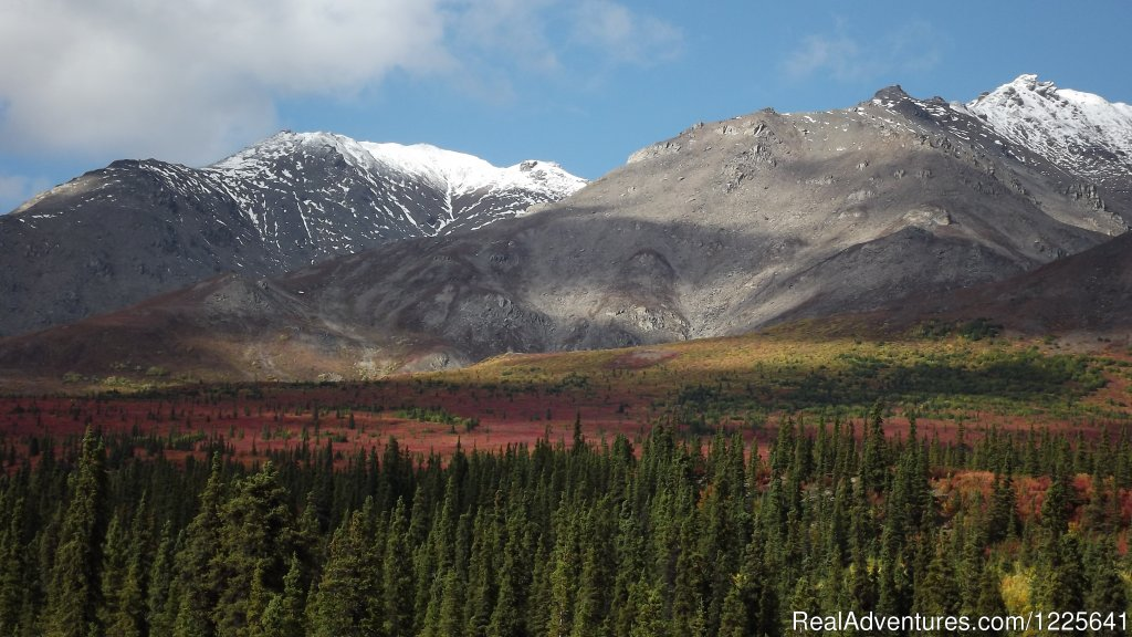 Denali Fall Colors are Beautiful in September | Image #7/9 | Alaska Small Group Guided Wildlife & Glacier Tours