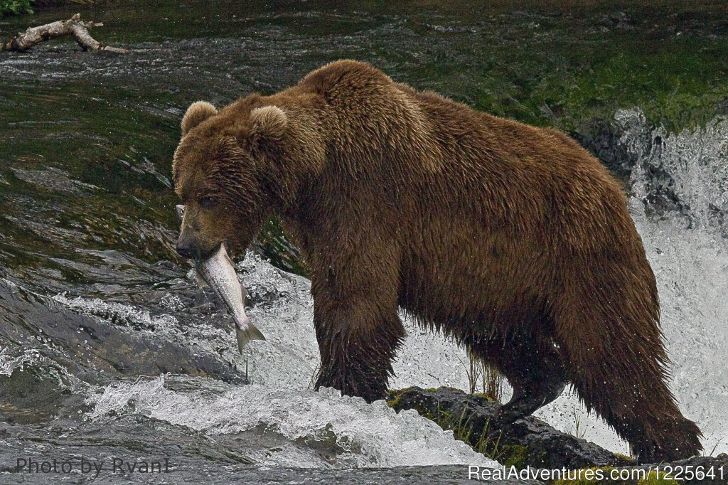 Remote Bear Viewing | Image #2/9 | Alaska Small Group Guided Wildlife & Glacier Tours
