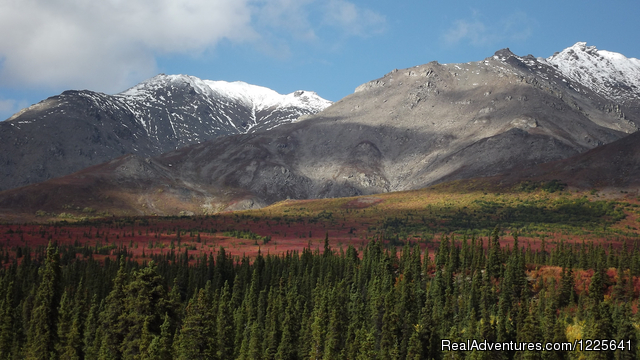 Denali Fall Colors are Beautiful in September - Alaska Small Group Guided Wildlife & Glacier Tours