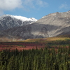 Denali Fall Colors are Beautiful in September