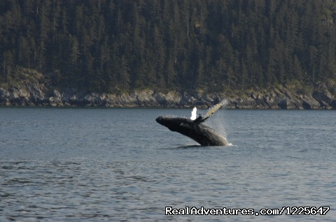 Image #10 of 11 - Alaskan Tour Guides, Inc.