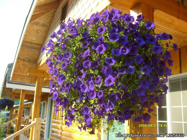 Petunias hanging from deck - Denali Fireside Cabins & Suites