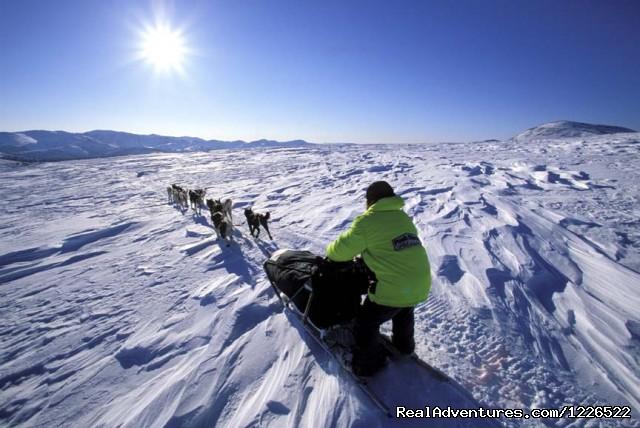 Dog sledding with Muktuk Adventures (#2 of 7) - Muktuk Adventures