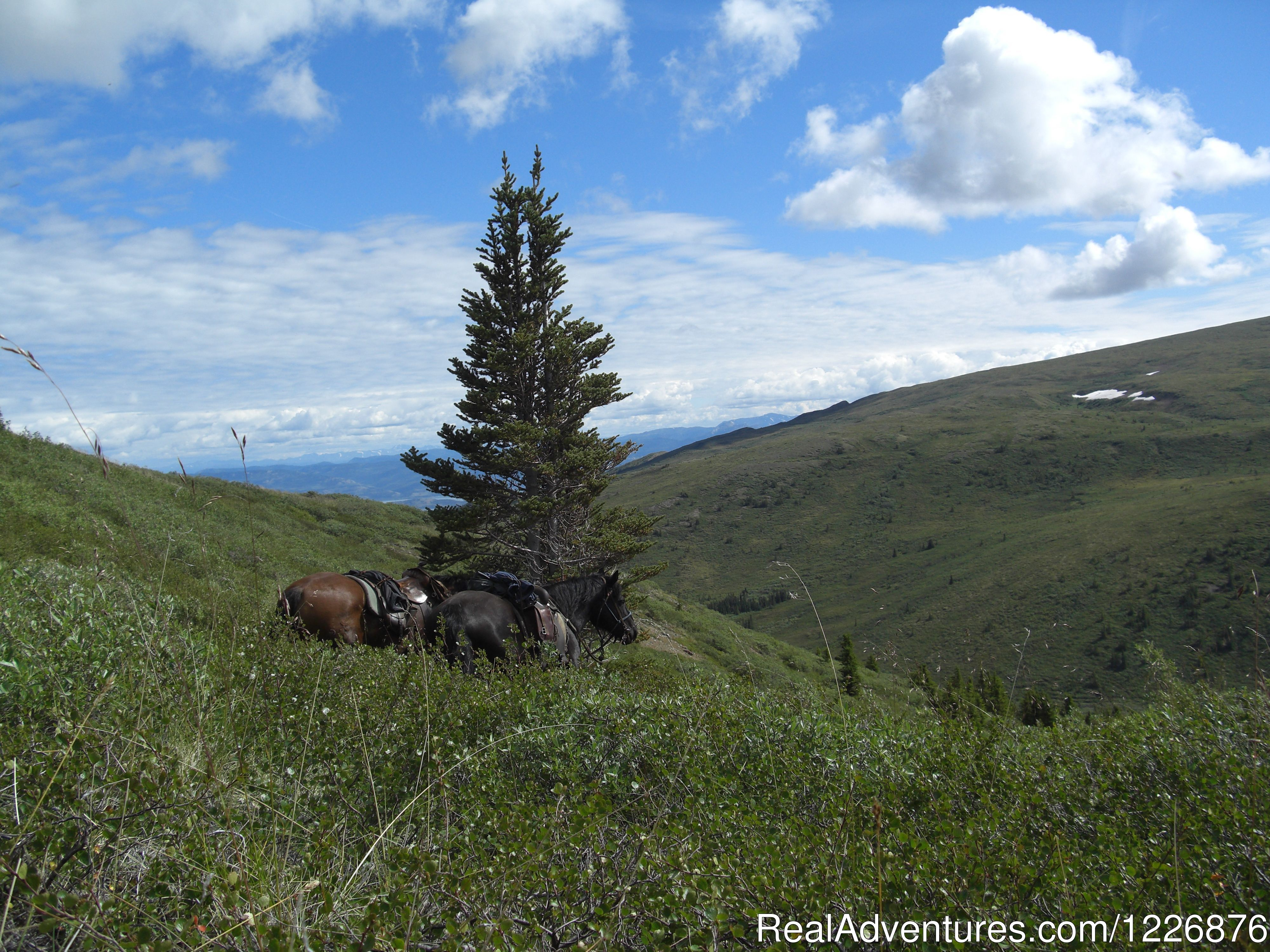 Horseback trips in the Yukon/Canada
