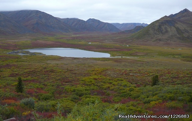 along the Dempster Highway - Bird Watching Tour in Yukon Canada