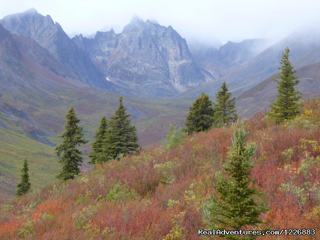 Tombstone Territorial Park (#3 of 6) - Bird Watching Tour in Yukon Canada