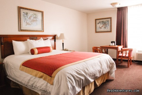 Guest Room with Single King bed - BEST WESTERN SOUTH BAY HOTEL at LAX Area