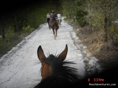 Wild West Horse Back Riding in Ocala near Disney: Your horse is saddled and ready!