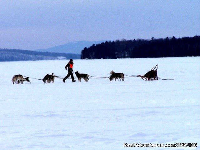 February Hosts the 100 mile dog sled race - Mooseheadchalet