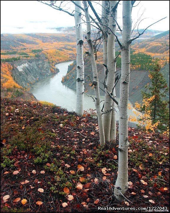 Grand Canyon of the Stikine River Vista | Image #13/14 | Wilderness Adventure Tours in Wrangell, Alaska