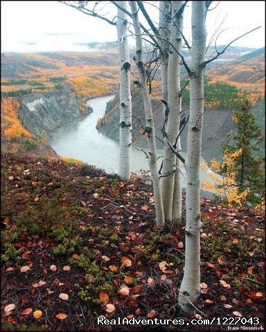 Grand Canyon of the Stikine River Vista - Wilderness Adventure Tours in Wrangell, Alaska