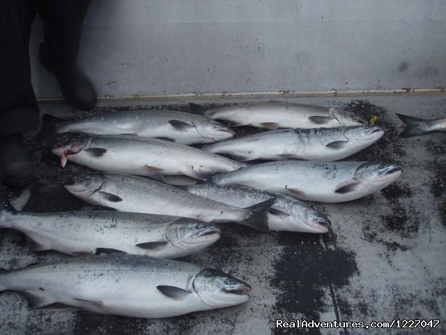 Coho salmon (#9 of 9) - Fish Wrangell