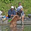 Bears and Fishing