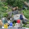 Guided Fishing & Bear Viewing