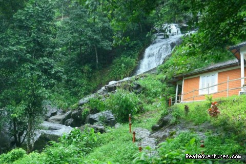 Green Paradise Resorts also provides the following services - Green Paradise Resorts Wayanad
