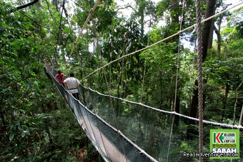 Canopy Walk at Poring Hot Spring, Ranau (#8 of 25) - 5d/4n Sabah Below The Wind Esplanade Packages