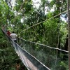 Canopy Walk at Poring Hot Spring, Ranau