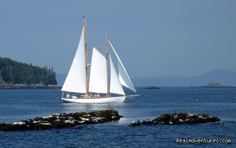 Schooner Heron sails past seals on ledges (#2 of 5) - Schooner Heron Eco WIldlife Tour