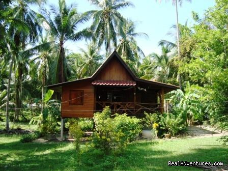 - Jungle Resort bungalows