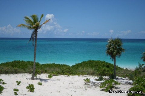 Hut Pointe Inn-Eco-Friendly Suites- Bahamas: Beach Across the Street