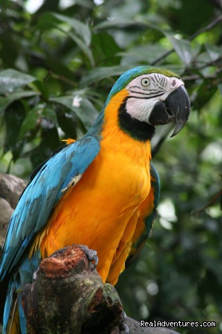 - Visit Leticia and the amazon rainforest