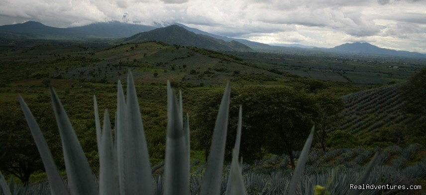 The awesome Agave fields | Image #13/13 | Horseback Riding Mexican Tours