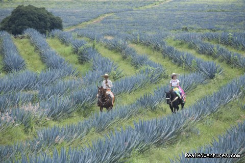 Horseback Riding at the Agave fields in Jalisco - Horsetrail M?xico Tours