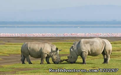 Day  Excursions , L.Nakuru National Park,Short Excursions - Budget Camping,Kenya Safari, Camping on RoofTent