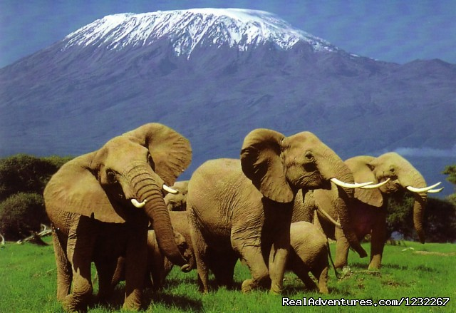 Amboseli National Park - Budget Camping,Kenya Safari, Camping on RoofTent