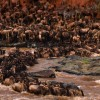 Kenya Tanzania Combined Road Safari/Package