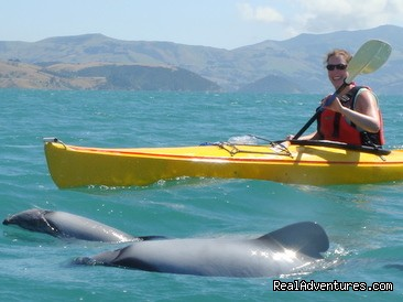 Akaroa Guided Kayak Safari Kayaking with Hector Dolphins