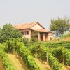 Romantic guesthouse among wine hills Vaglio Serra, Italy Bed & Breakfasts
