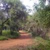 Misiones Trails