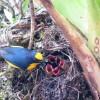 Bird on the stairway tree