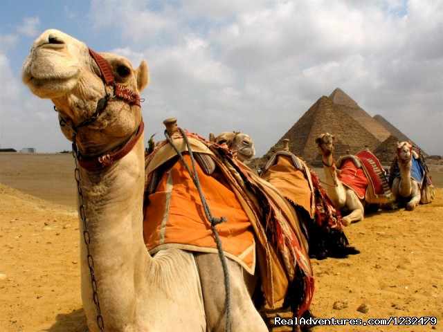 Camel Ride- pyramids - Egypt Best Travel Deals