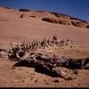 Wadi Al Hitan - Fayoum