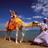 Red Sea - Ride camel on Beach