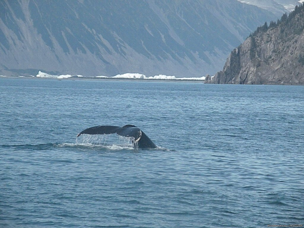 Kenai Fjords National Park Cruise | Image #14/14 | Beach House Rentals