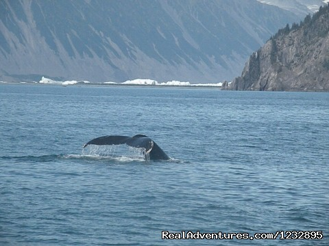 Kenai Fjords National Park Cruise - Beach House Rentals