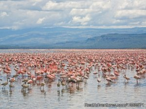 Genet Tours and Safaris Nairobi, Kenya Sight-Seeing Tours