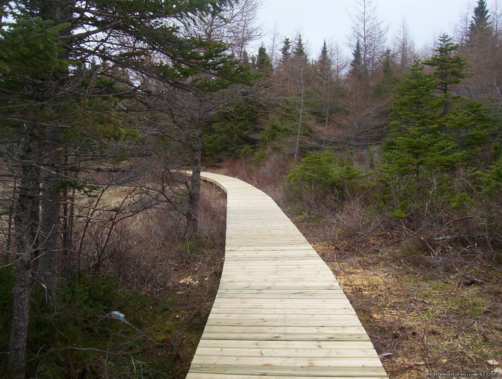 Trail at Baine Hr., Nl | Image #7/26 | Learn local ways with Eastern Edventures