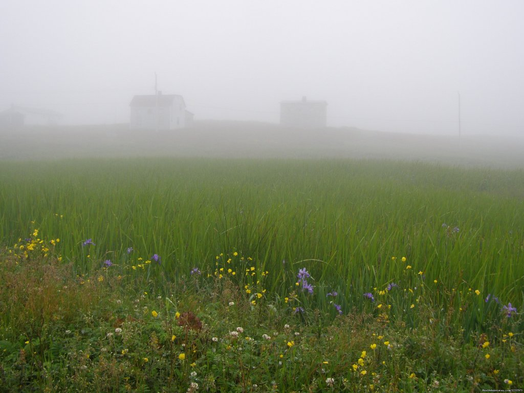 Fog in taylor's Bay | Image #19/26 | Learn local ways with Eastern Edventures