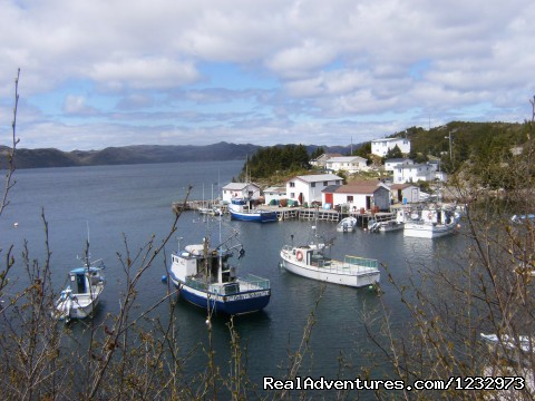Boats at South East Bight, NL - Learn local ways with Eastern Edventures