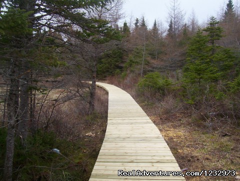 Trail at Baine Hr., Nl - Learn local ways with Eastern Edventures