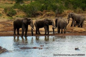 Three Days Tsavo Best Safari mombasa, Kenya Wildlife & Safari Tours