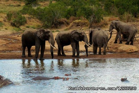 Three Days Tsavo Best Safari: