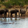 Three Days Tsavo Best Safari Wildlife & Safari Tours Mombasa, Kenya
