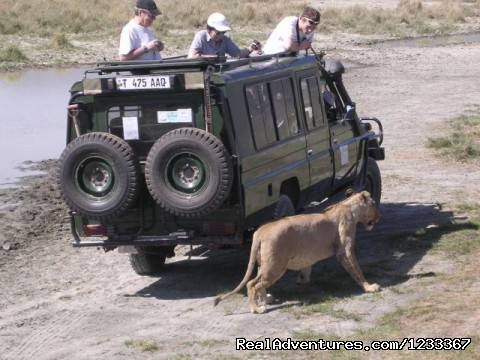 - Adventure Wildlife Safari and Beach holiday