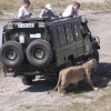 Adventure Wildlife Safari and Beach holiday Dar es Salaam, Tanzania Wildlife & Safari Tours